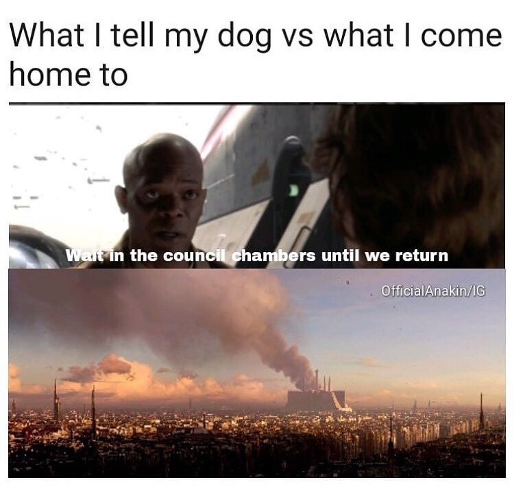 Sky - What I tell my dog vs what I come home to Walt in the council chambers until we return OfficialAnakin/IG