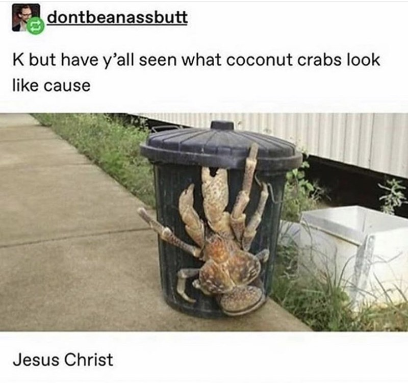 tumblr - Table - dontbeanassbutt K but have y'all seen what coconut crabs look like cause Jesus Christ