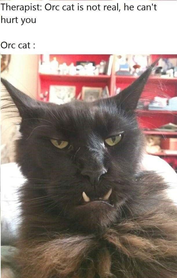 Cat - Therapist: Orc cat is not real, he can't hurt you Orc cat