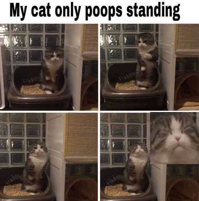 Cat - My cat only poops standing