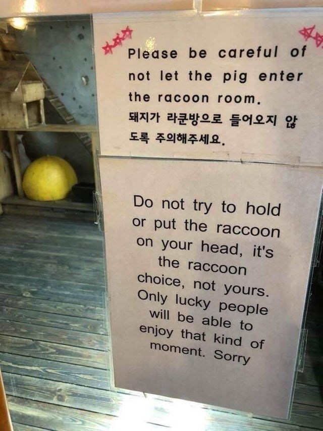 Text - Please be careful of not let the pig enter the racoon room. 돼지가 라쿤방으로 들어오지 않 도록 주의해주세요. Do not try to hold or put the raccoon on your head, it's the raccoon choice, not yours. Only lucky people will be able to enjoy that kind of moment. Sorry