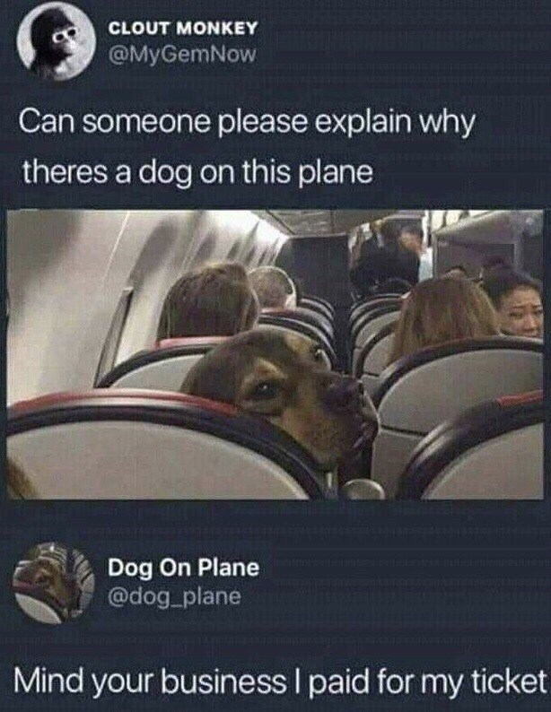 Transport - CLOUT MONKEY @MyGemNow Can someone please explain why theres a dog on this plane Dog On Plane @dog plane Mind your business I paid for my ticket