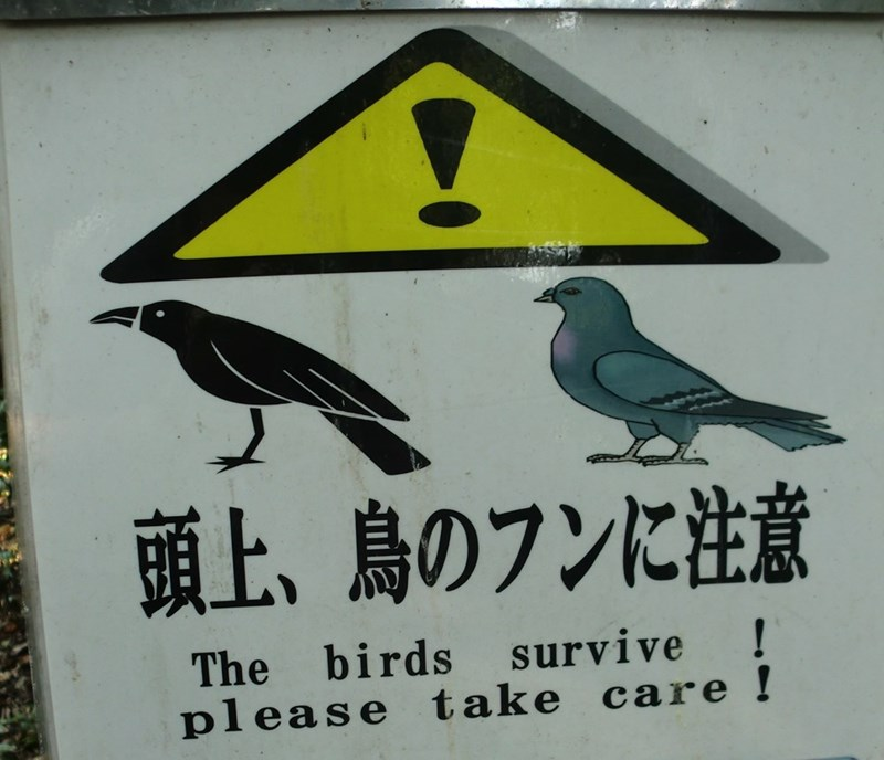 translation - Bird - 頭上、島のフンに注意 ! The birds survive pl ease take care !