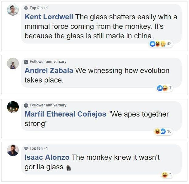 """Text - Top fan +1 Kent Lordwell The glass shatters easily with a minimal force coming from the monkey. It's because the glass is still made in china. 42 Follower anniversary Andrei Zabala We witnessing how evolution takes place Follower anniversary Marfil Ethereal Coñejos """"We apes together strong"""" 16 Top fan +1 Isaac Alonzo The monkey knew it wasn't gorilla glass 2"""