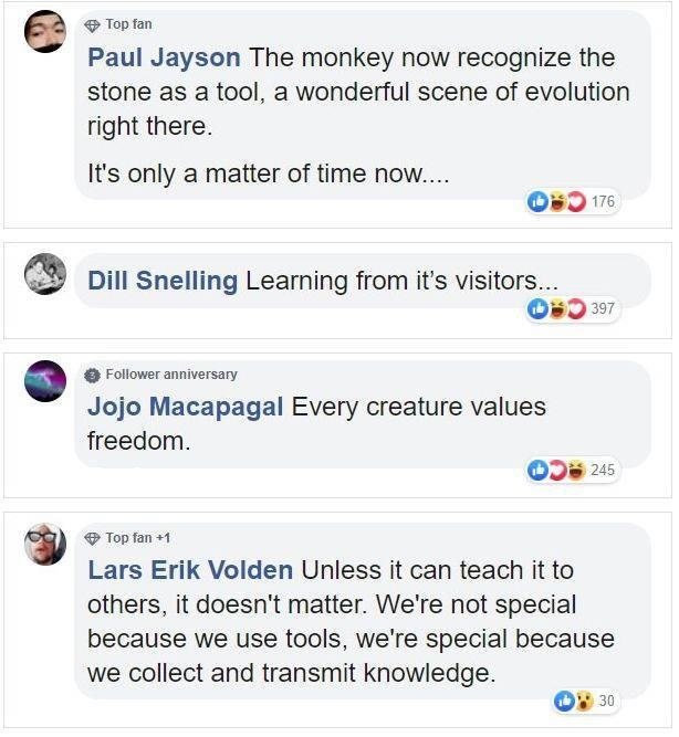 Text - Top fan Paul Jayson The monkey now recognize the stone as a tool, a wonderful scene of evolution right there It's only a matter of time now.... 176 Dill Snelling Learning from it's visitors... D 397 Follower anniversary Jojo Macapagal Every creature values freedom 245 Top fan +1 Lars Erik Volden Unless it can teach it to others, it doesn't matter. We're not special because we use tools, we're special because we collect and transmit knowledge. 30