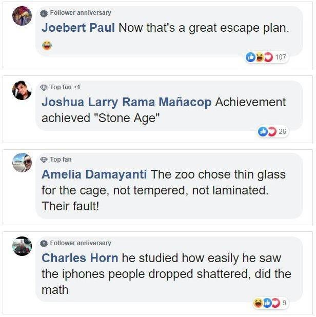 """Text - Follower anniversary Joebert Paul Now that's a great escape plan 107 Top fan +1 Joshua Larry Rama Mañacop Achievement achieved """"Stone Age"""" 26 Top fan Amelia Damayanti The zoo chose thin glass for the cage, not tempered, not laminated Their fault! Follower anniversary Charles Horn he studied how easily he saw the iphones people dropped shattered, did the math 9"""