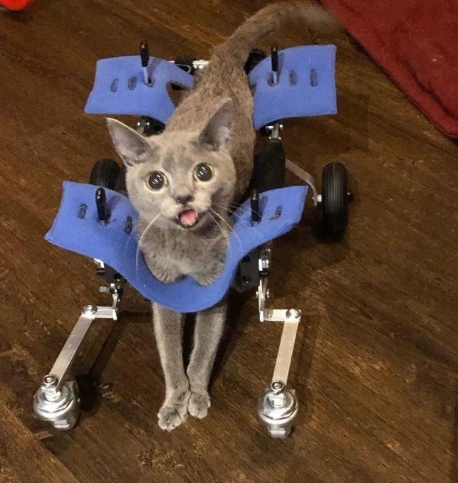 Cat - J B