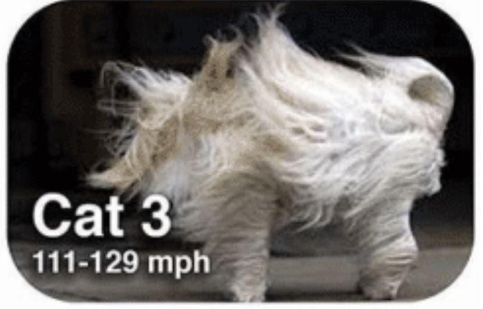 Dog breed - Cat 3 111-129 mph