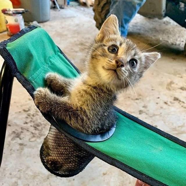 aww cups kitten cute Cats animals - 9353441536