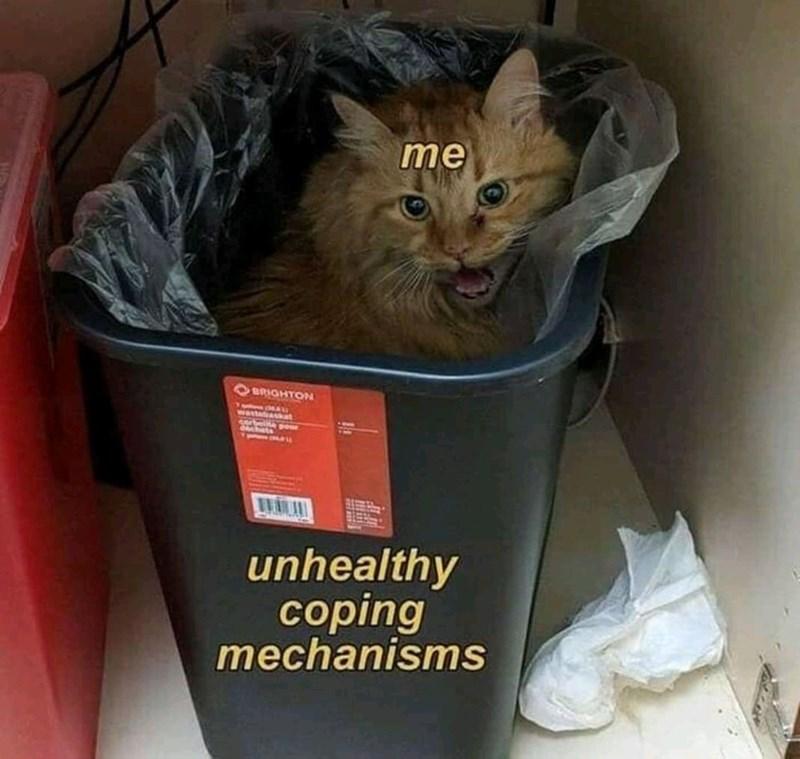 cartoon meme - Cat - me BRIGHTON wasteaskt Cert ow chts unhealthy coping mechanisms