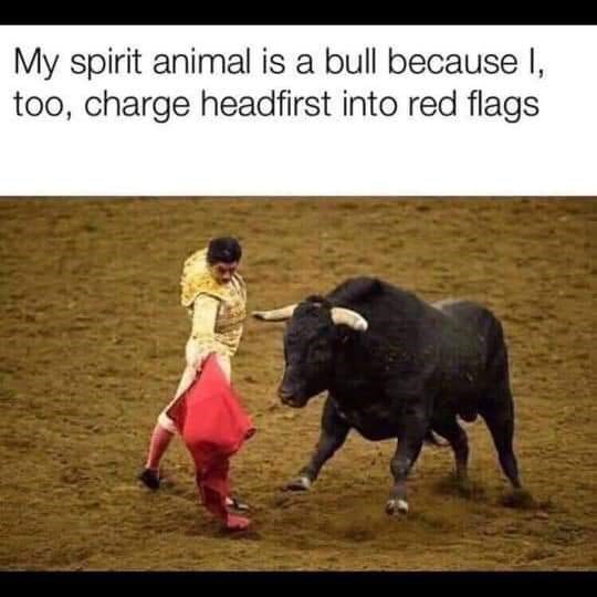 Bull - My spirit animal is a bull because I, too, charge headfirst into red flags