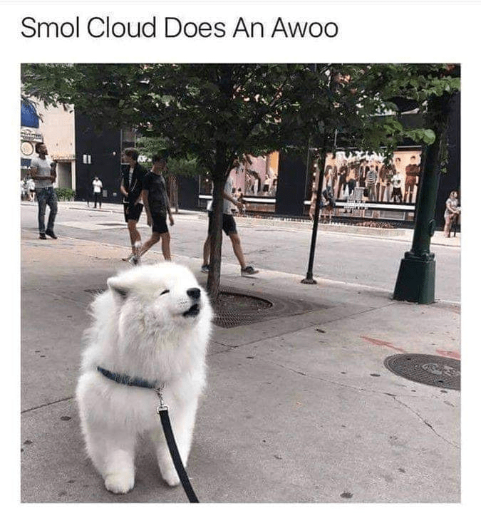 Dog - Smol Cloud Does An Awoo