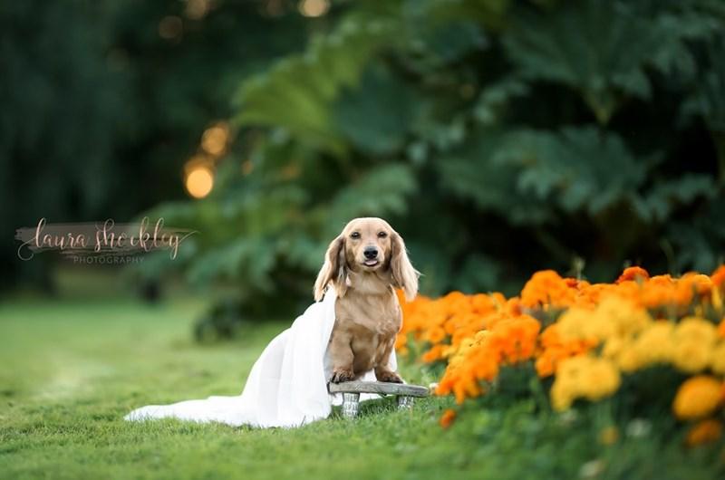 Dog - doura thertly PHOTOGRAPHY