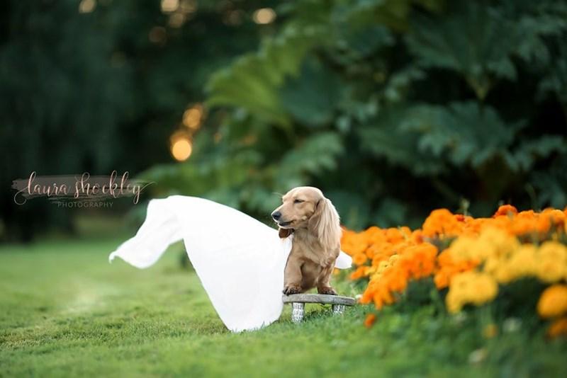 Dog - daura sreakley PHOTOGRAPHY