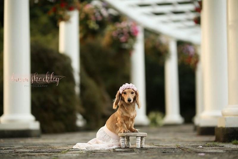 Dog - PHOTOGRAPHY