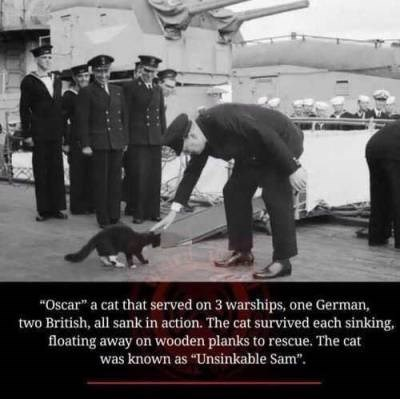 """wholesome animal meme - Police dog - """"Oscar"""" a cat that served on 3 warships, one German, two British, all sank in action. The cat survived each sinking, floating away on wooden planks to rescue. The cat was known as """"Unsinkable Sam""""."""
