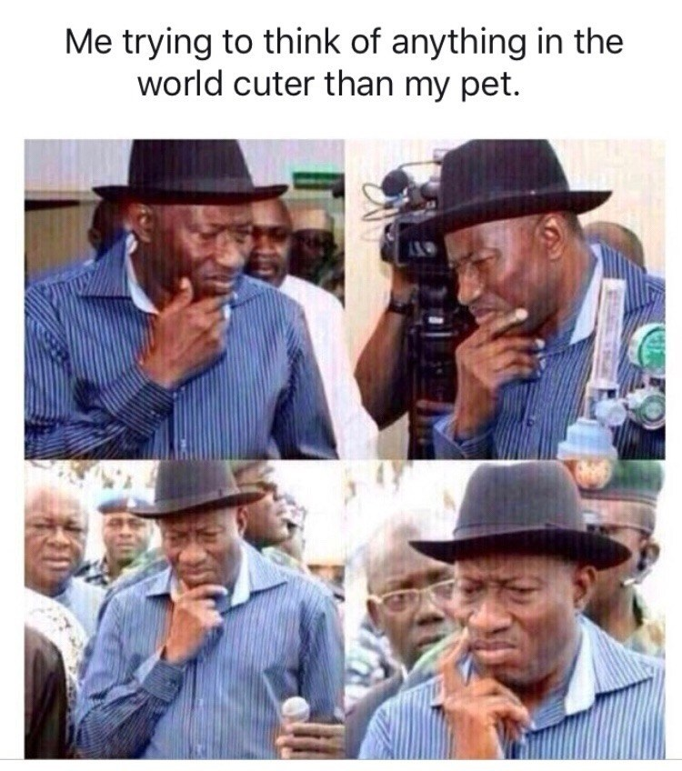 wholesome animal meme - Headgear - Me trying to think of anything in the world cuter than my pet.