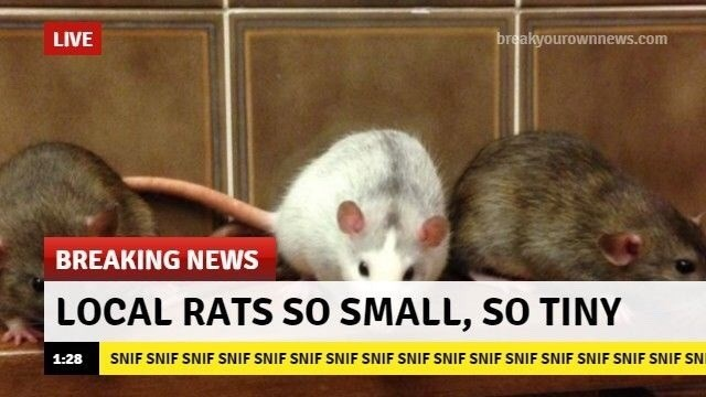 wholesome animal meme - Rat - breakyourownnews.com LIVE BREAKING NEWS LOCAL RATS SO SMALL, SO TINY SNIF SNIF SNIF SNIF SNIF SNIF SNIF SNIF SNIF SNIF SNIF SNIF SNIF SNIF SNIF SNIF SNI 1:28