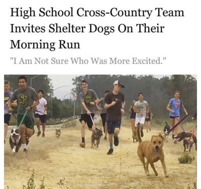 """wholesome animal meme - Dog - High School Cross-Country Team Invites Shelter Dogs On Their Morning Run """"I Am Not Sure Who Was More Excited."""""""