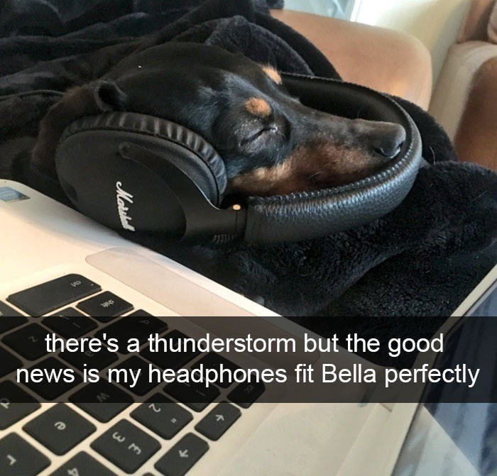 wholesome animal meme - Canidae - there's a thunderstorm but the good news is my headphones fit Bella perfectly Moris
