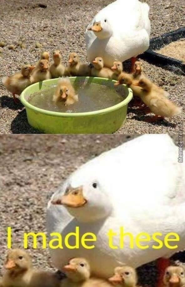 wholesome animal meme - Duck - made these MemeCenter