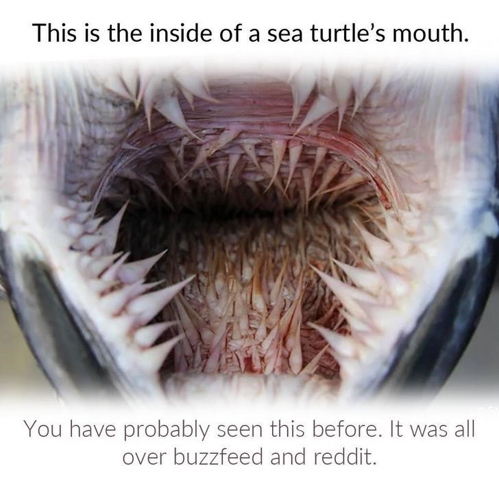 Skin - This is the inside of a sea turtle's mouth You have probably seen this before. It was all over buzzfeed and reddit.