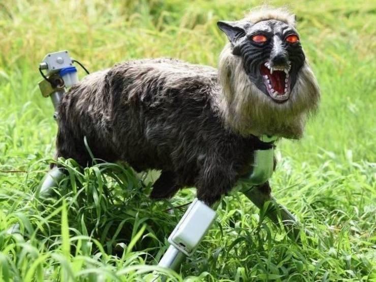 weird japan - Goats