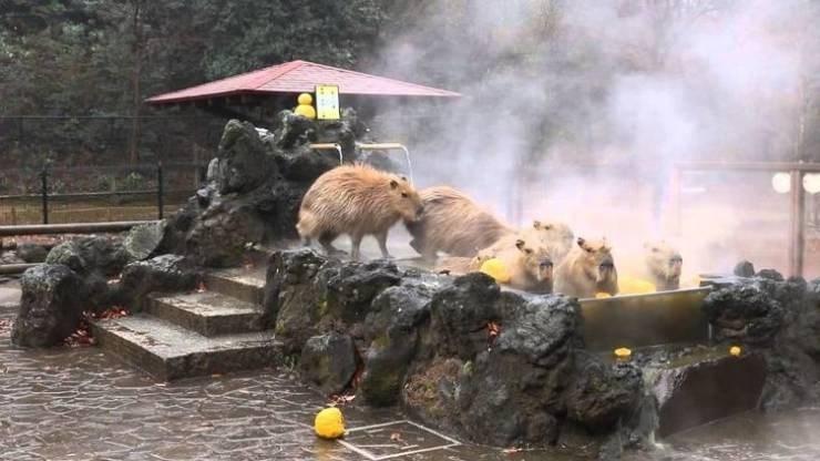weird japan - Macaque
