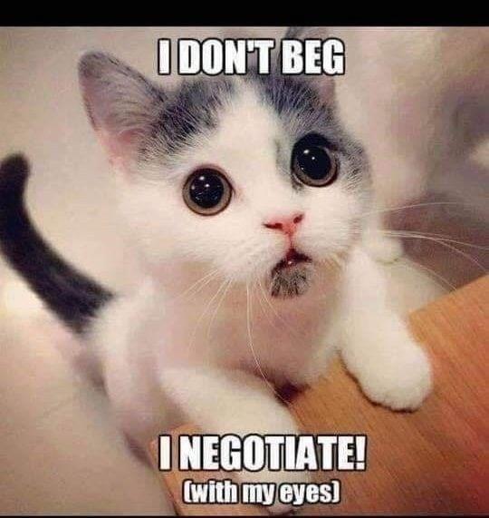 cat memes - 9354245888