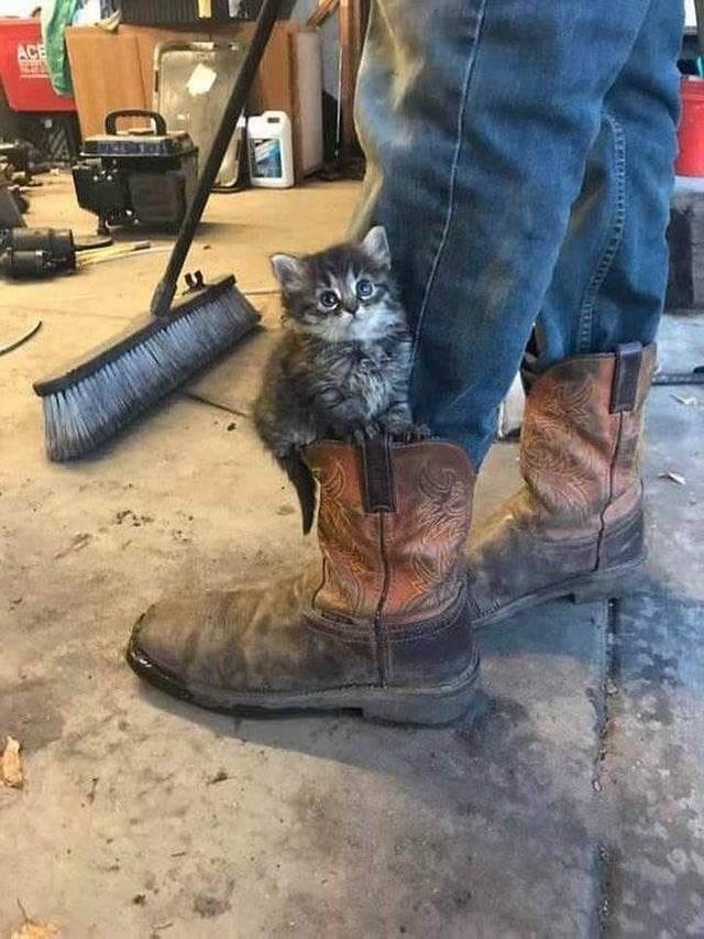cute animal - Cat - ACE