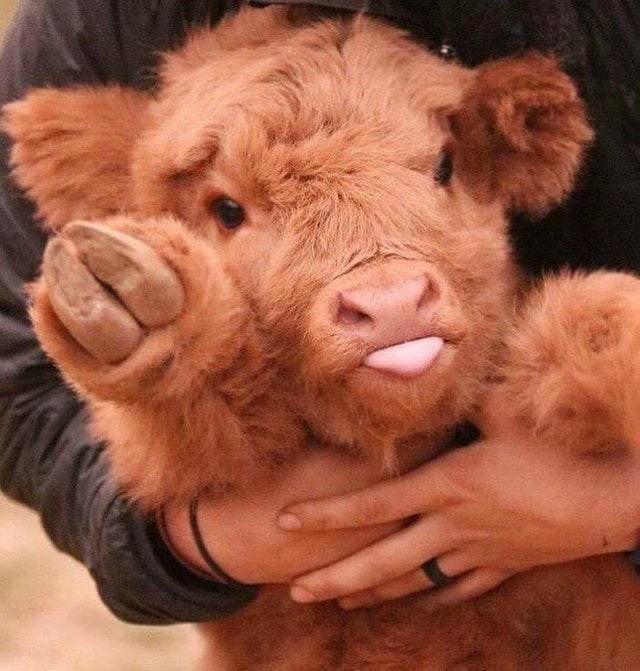 cute animal - Skin