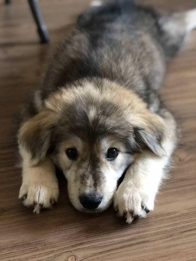 cute animal - Dog
