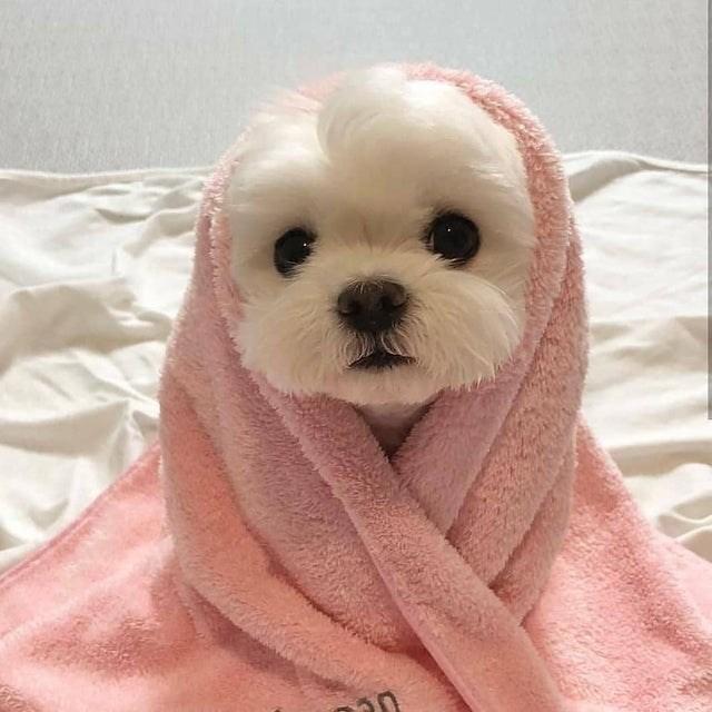 cute animal - Mammal