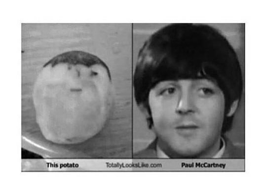 Face - This potato TotallyLooksLike.com Paul McCartney