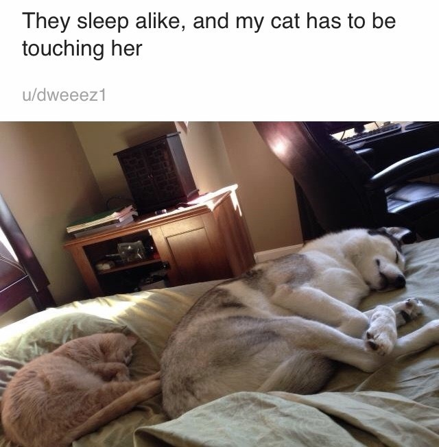 Canidae - They sleep alike, and my cat has to be touching her u/dweeez1
