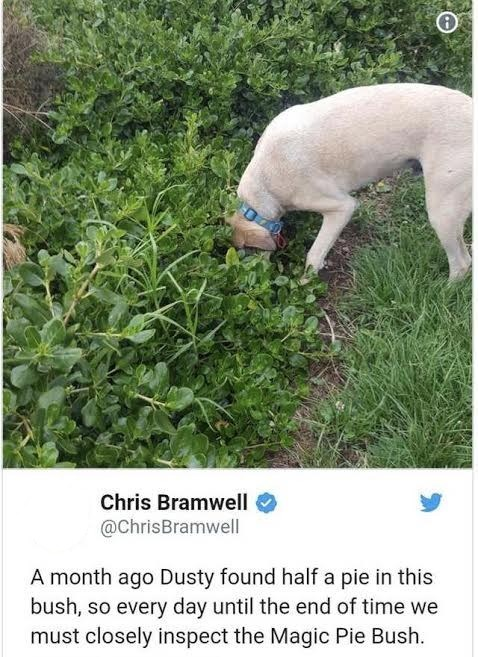 """Funny meme that reads, """"A month ago Dusty found half a pie in this bush, so every day until the end of time we must closely inspect the Magic Pie Bush."""""""