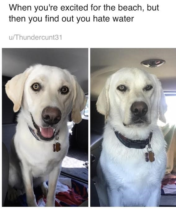 Dog - When you're excited for the beach, but then you find out you hate water u/Thundercunt31