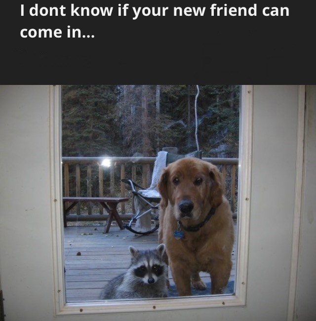 Dog - I dont know if your new friend can come in...