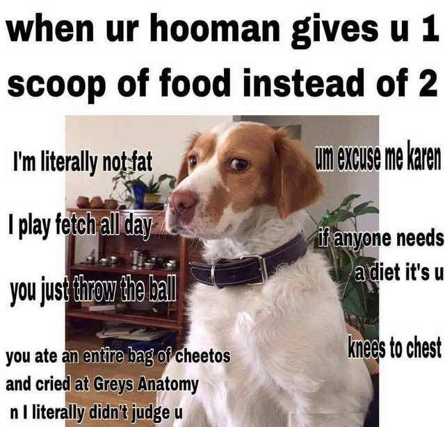Dog - when ur hooman gives u 1 scoop of food instead of 2 Un excuse me karen I'm literally not fat I play fetch all day itanyone needs a diet it's you just throw the hall knees to chest you ate an entire bag of cheetos and cried at Greys Anatomy n I literally didn't judge u