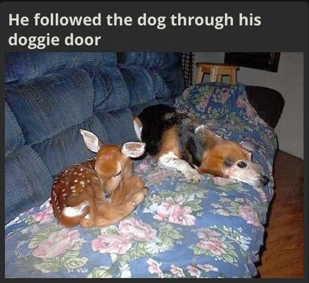Canidae - He followed the dog through his doggie door