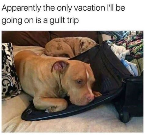 Dog - Apparently the only vacation I'll be going on is a guilt trip