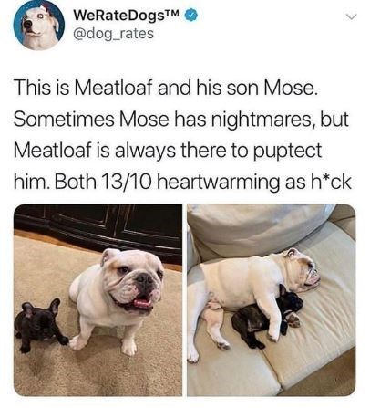 Dog - WeRateDogsTM @dog rates This is Meatloaf and his son Mose. Sometimes Mose has nightmares, but Meatloaf is always there to puptect him. Both 13/10 heartwarming as h*ck