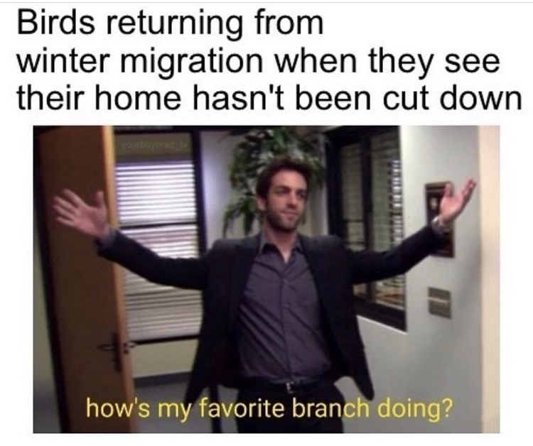 Text - Birds returning from winter migration when they see their home hasn't been cut down yourboybrad t how's my favorite branch doing?