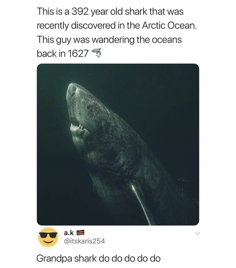 Organism - This is a 392 year old shark that was recently discovered in the Arctic Ocean. This guy was wandering the oceans back in 1627 a.k @itskaris254 Grandpa shark do do do do do