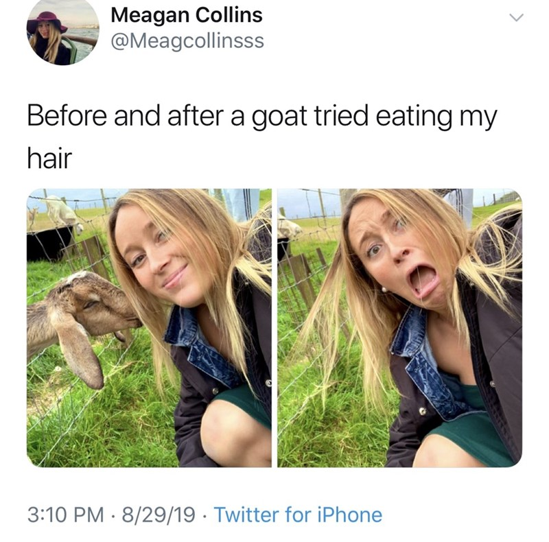 Hair - Meagan Collins @Meagcollinsss Before and after a goat tried eating my hair 3:10 PM 8/29/19 Twitter for iPhone