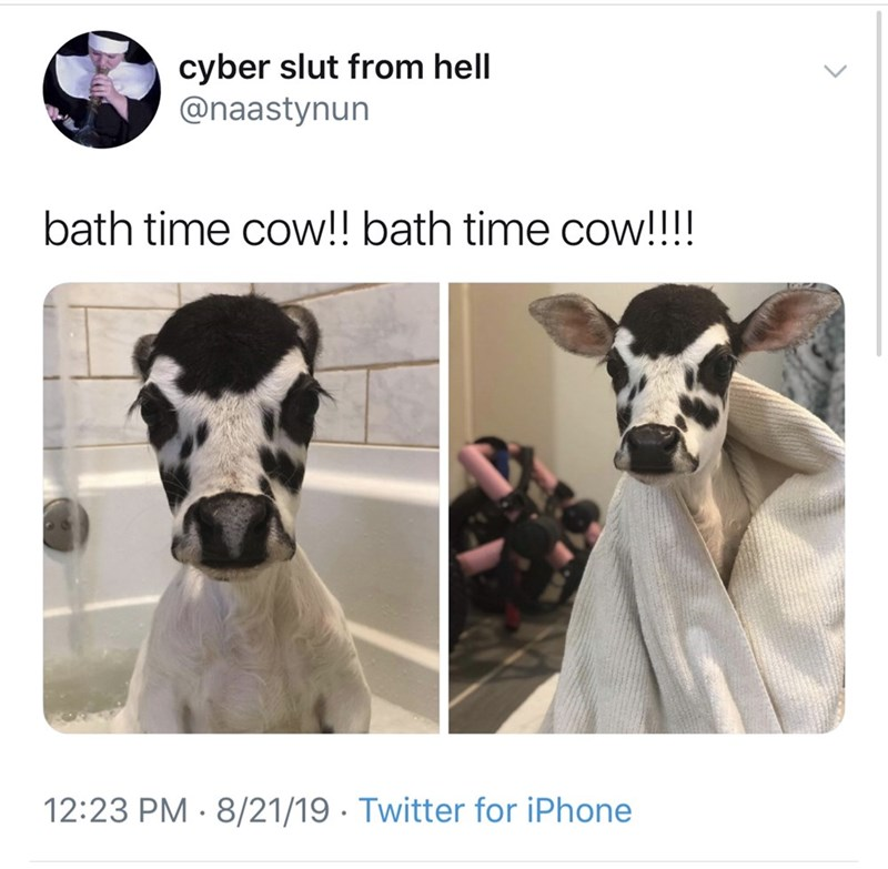 Snout - cyber slut from hell @naastynun bath time cow!! bath time cow!!! 12:23 PM 8/21/19 Twitter for iPhone