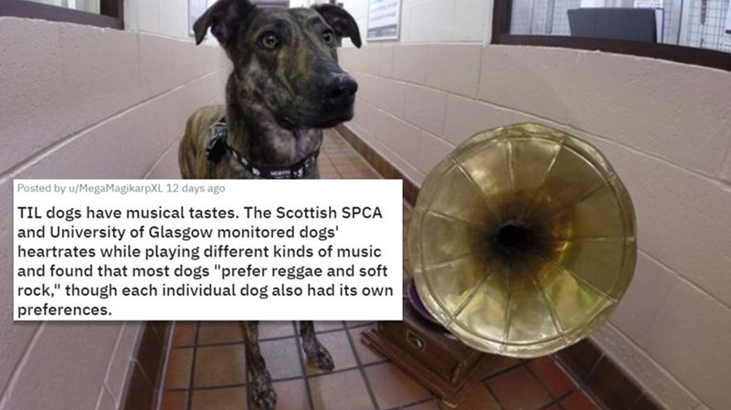 """Dog - Posted by u/MegaMagikarpXL 12 days ago TIL dogs have musical tastes. The Scottish SPCA and University of Glasgow monitored dogs' heartrates while playing different kinds of music and found that most dogs """"prefer reggae and soft rock,"""" though each individual dog also had its own preferences."""