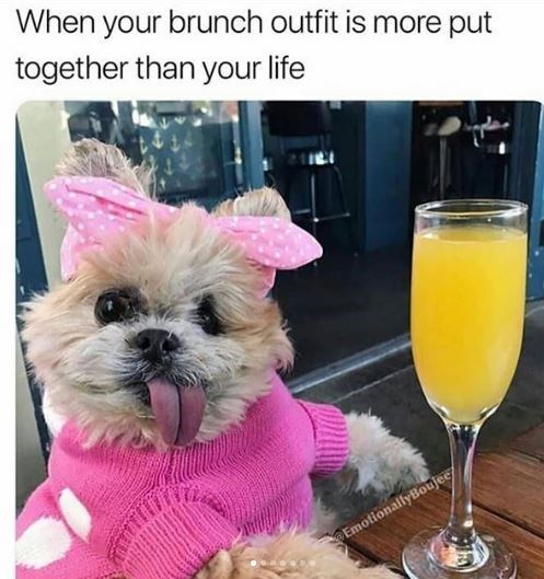 Dog - When your brunch outfit is more put together than your life EmotionallyBoujee