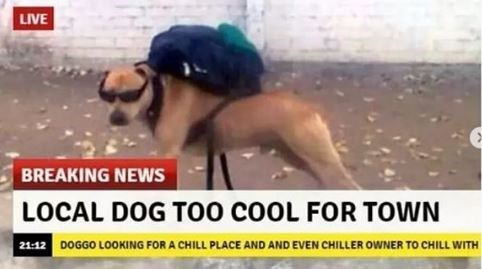 Headgear - LIVE BREAKING NEWS LOCAL DOG TOO coOL FOR TOWN 21:12 DOGGO LOOKING FOR A CHILL PLACE AND AND EVEN CHILLER OWNER TO CHILL WITH