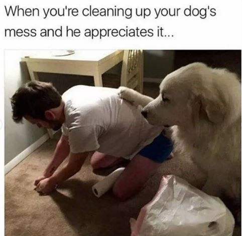 Dog - When you're cleaning up your dog's mess and he appreciates it..